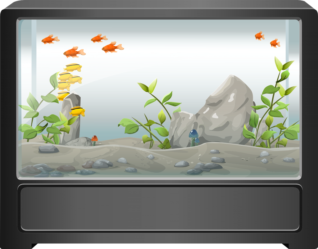 moving with a fish tank